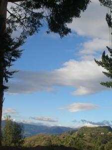 Cielo entre árboles
